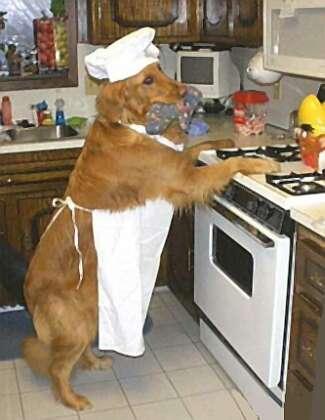 dog_cook