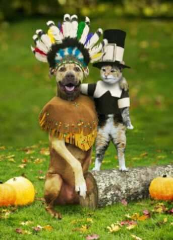 thanksgiving_dog_&_cat