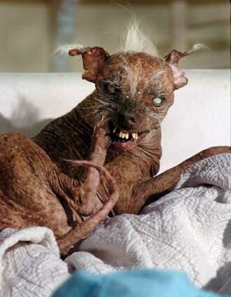 ugliest_dog
