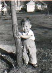jackal_&_tree_fall_of_1956
